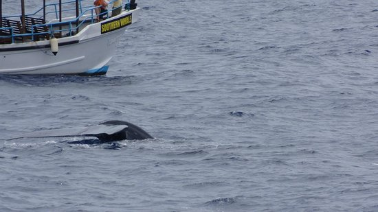Pethminro Guest House : Whale Watching