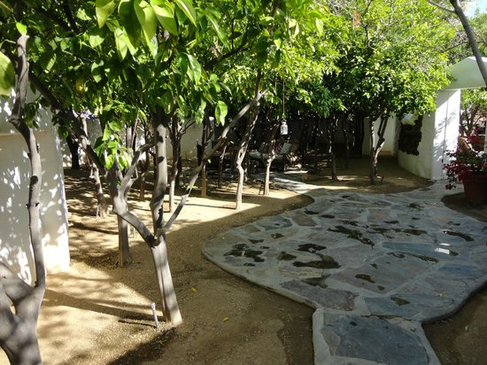 Korakia Pensione: View of citrus grove from just inside room gate