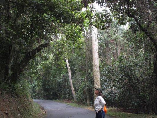 Parque Estadual da Cantareira: Trilha da Pedra Grande  9,6 km ida e volta