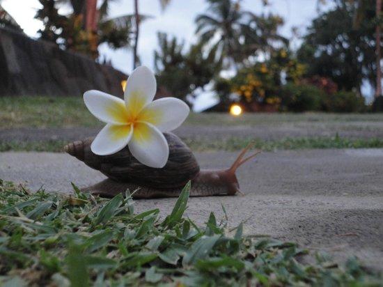 Sofitel Mauritius L'Imperial Resort & Spa: Deine Schnecke