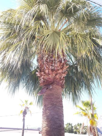 Palm Springs Rendezvous: Palms right in the pool area