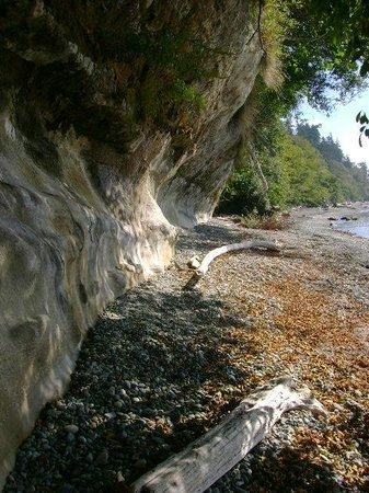 Straitview Ridge B&B: FOSSIL CLIFFS AT MUIR CREEK BEACH
