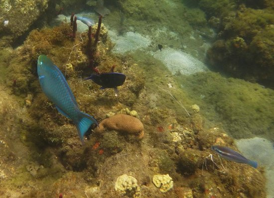 The Inn On The Bay: Snorkeling at Anse de Pitons, our first water-taxi visit