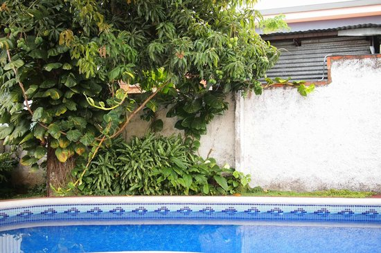Hotel Mi Tierra: Swiming pool with fruit trees surrounding it