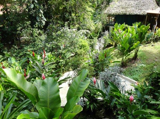 Monkey Tree Casitas: El patio
