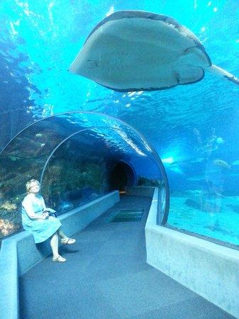 Maui Ocean Center: Ocean tunnel