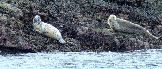 Gairloch Marine Life Centre & Cruises: a pair of female seals