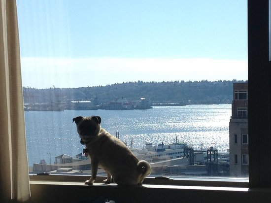 Loews Hotel 1000, Seattle: Our dog in window of room