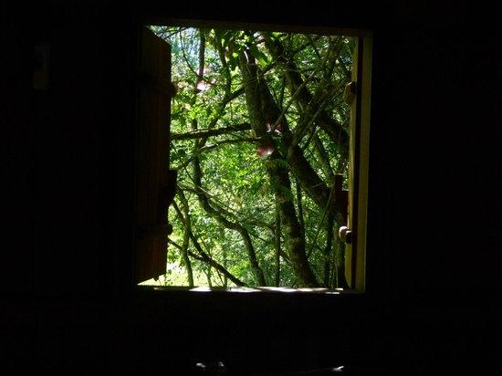 Posada La Bonita: Vista directa a la selva