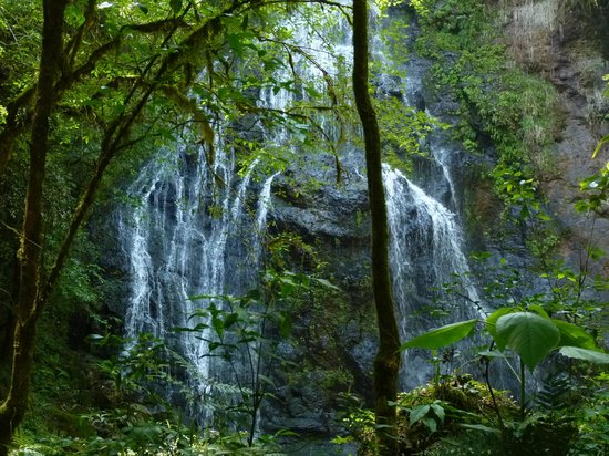 Posada La Bonita: La cascada