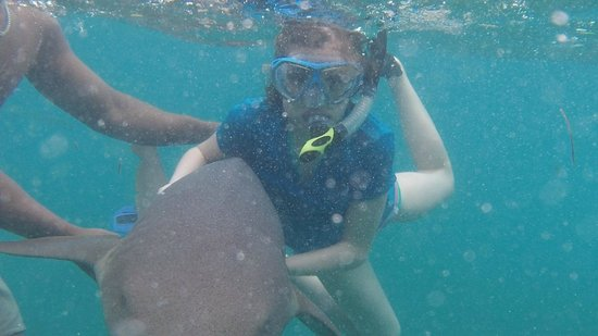 Athens Gate Beach Resort: Playing with sharks