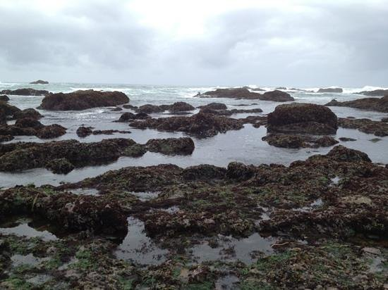 Glass Beach: tide pools and glass