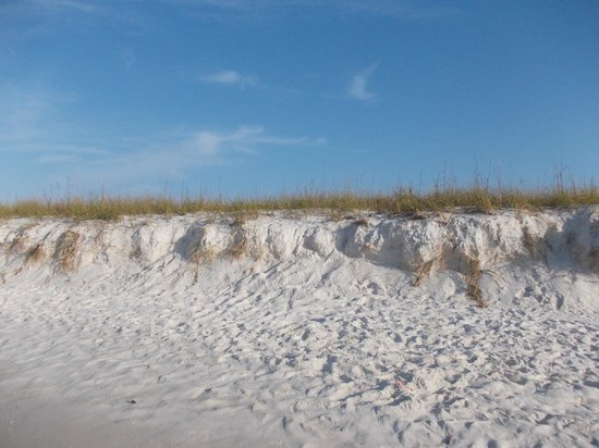 Navarre Beach: Dunes