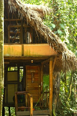 Cotton Tree Lodge: Jungle Cabana