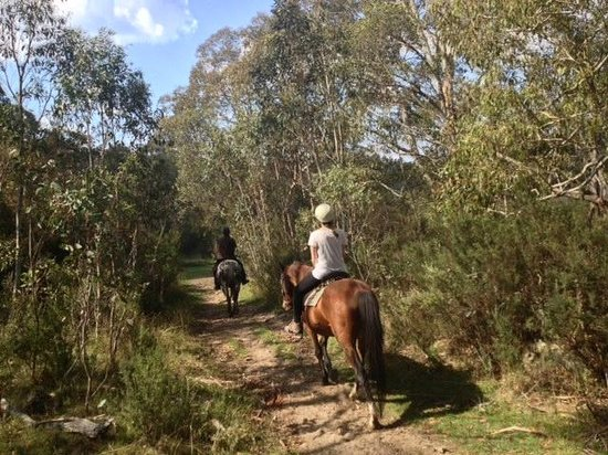 Crackenback, Australia: 2 hour trail ride