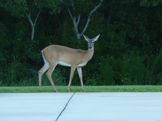 Great Outdoors RV Resort: every evening you will see deer roaming