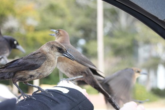 Wingate by Wyndham Southport: Almost flew in the car