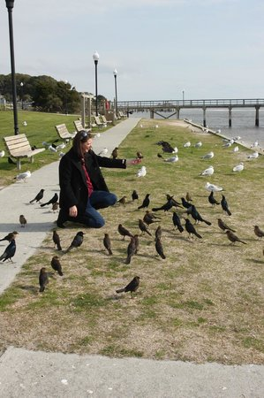 Wingate by Wyndham Southport: Attentive birds