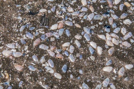 North Wildwood Beach: Dozens of Colorful Tiny Clams