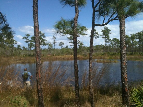 Jonathan Dickinson State Park: Johnathan Dickenson State park pond