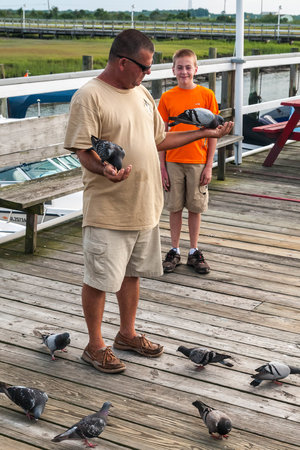 Salt Marsh Safari-The Skimmer: Feeding Pigeons Prior to Departure