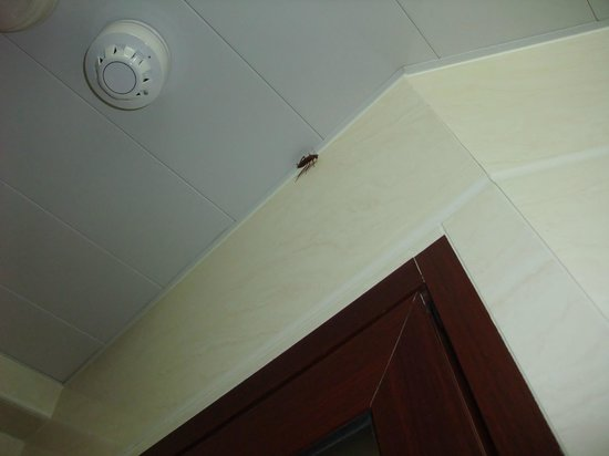 Marco Polo Hostel : COCKROACHES AGAIN!!!