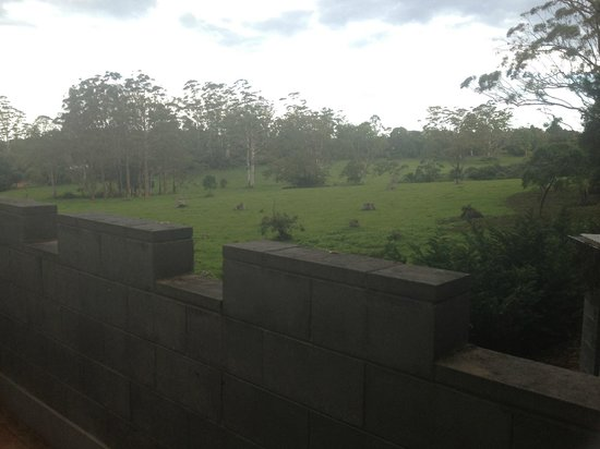 The Castle on Tamborine : view