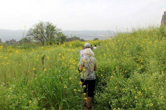 Hagoshrim Hotel & Nature : Trail walk