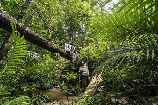 Four Seasons Resort Langkawi, Malaysia: Rainforest Immersion at Pulau Langgun