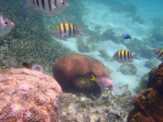 Grand Bahia Principe Jamaica: Snorkelling