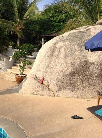 Jamahkiri Resort & Spa: whale by the pool