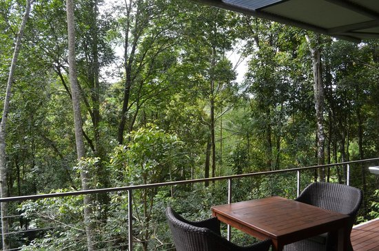 Crystal Creek Rainforest Retreat: The view from the livingroom