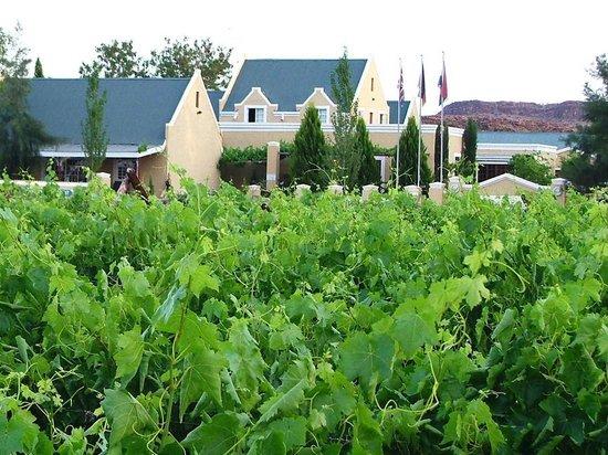 Vergelegen Restaurant: View from vineyards