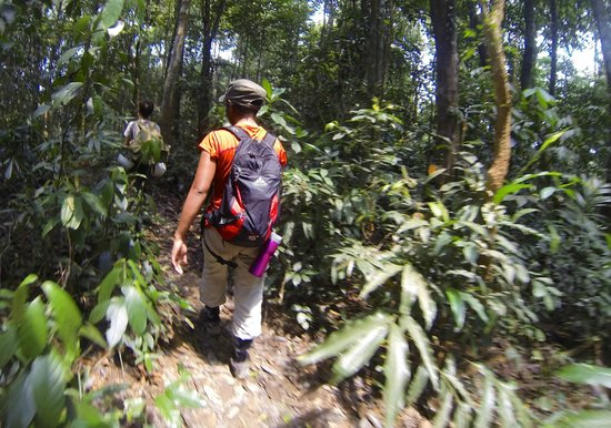 Active Travel Asia: Walking through the Jungle