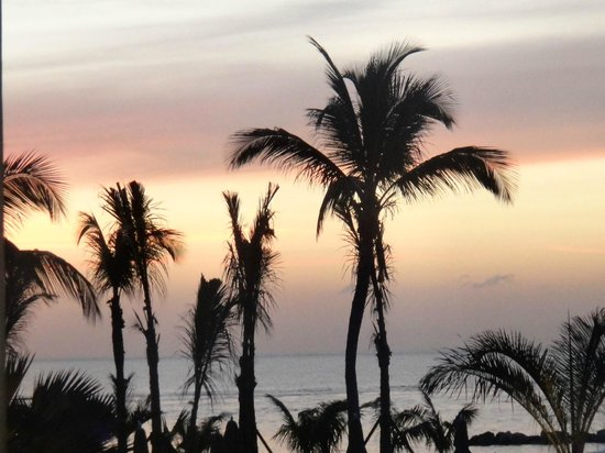 Four Seasons Resort Nevis, West Indies: The palms