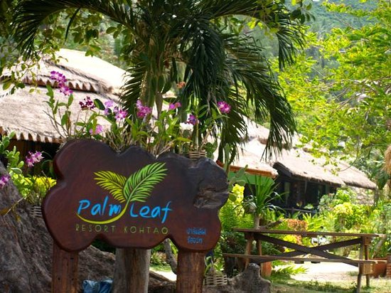 Palm Leaf Resort: Resort