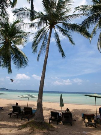 Palm Leaf Resort: Beach View