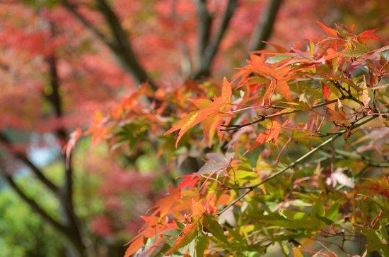 Eikan-dō : 永観堂の紅葉は色が華やか
