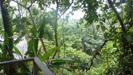 Paganakan Dii Tropical Retreat: view from balcony