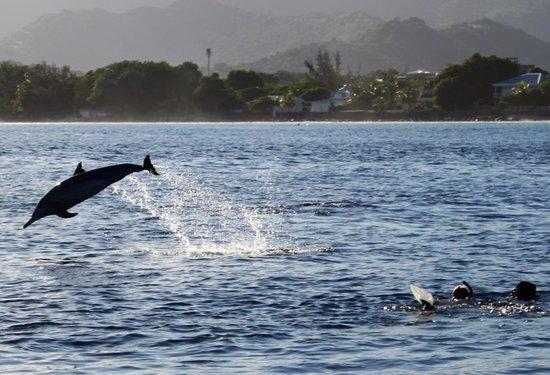 Sugar Beach Golf & Spa Resort : Dolphin Trip