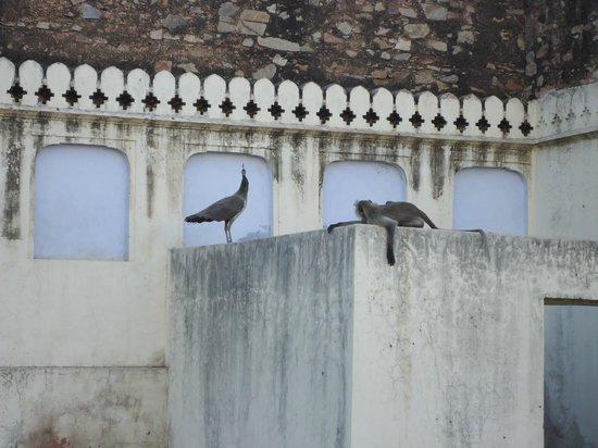 Hotel Sarovar Heritage: Monkeys