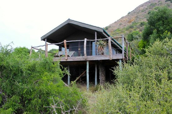 HillsNek Safaris, Amakhala Game Reserve: The tents