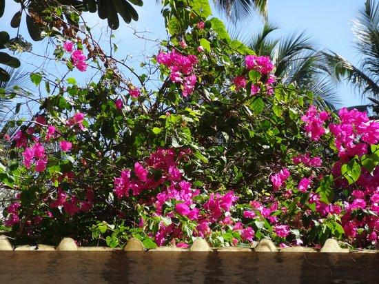 Kuramathi Island Resort: La végétation