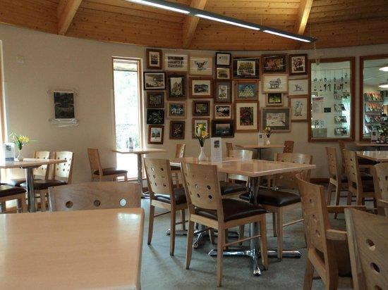 Brandon Country Park: Copper Beech Tea Room