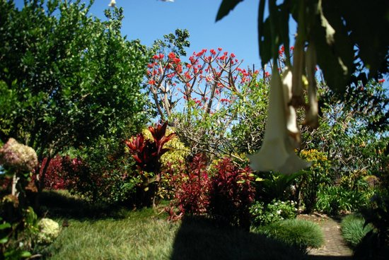 Hotel Bougainvillea: The gardens