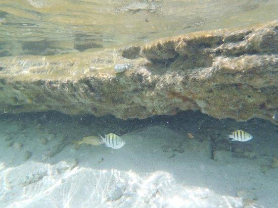 Decameron San Luis: en el acuario