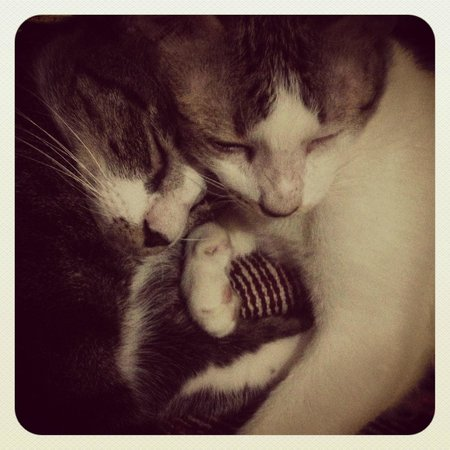 Sukhumvit On Nut Guesthouse: Cats snuggling