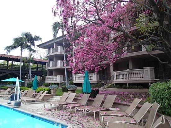 洛杉帕薩迪納朗廷亨廷頓酒店照片