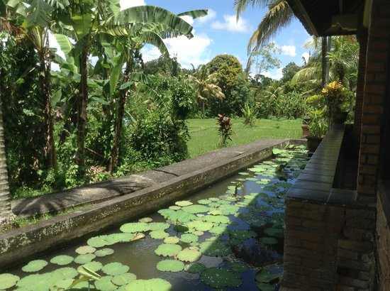 Melati Cottages: Rice paddies
