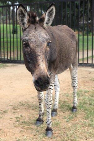 Heia Safari Ranch: Zonkey !!!!!!!!!!